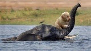 「泣ける感動動物」動物が他の動物の命を救う時の瞬間・見てて涙が止まらない