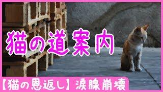 【猫の恩返し】 猫の道案内 – 涙腺崩壊・泣ける話