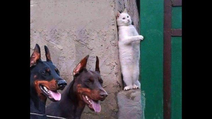 「おもしろ犬 」思わずに笑っちゃう犬と猫の喧嘩・どっちが強いのか