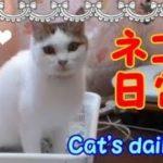 トイレして鳴いて甘えて大あくび!ネコの日常・・・うちの猫ちゃんたちカワイイTV