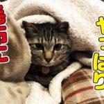 早朝に猫さんが寒そうにしていたので毛布で包んでみた!