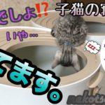 【奇跡】子猫の寝顔集 可愛い!あり得ないの撮れて笑えた!Kitten sleeping face collection