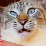 【刺激MAX】初めてのマタタビで猫が泥酔してしまいました…