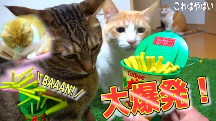 j猫たちの目の前でじゃがりこを爆発させてみたwww