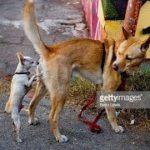 「面白い動物」あり得ないことをする犬, 猫・おもしろ犬, 猫のハプニング, 失敗集 #284