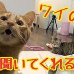【猫 鳴き声】こっちを見て話しかけてくる猫がかわいいw