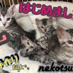 【悲報】ベンガルの子猫 はじめての離乳食を手作りした結果やっぱりそうなったかの図。〜可愛い子猫たちに愛を込めて〜