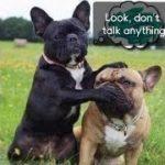 「面白い動物」あり得ないことをする犬, 猫・おもしろ犬, 猫のハプニング, 失敗集 #285