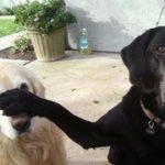 2019「絶対笑う」最高におもしろ犬,猫,動物のハプニング, 失敗画像集 #29