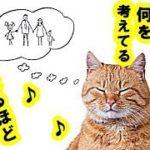 猫の気持ち・猫がボーッとしてる時に考えてる5つの事~猫はこんなこと考えてる・招き猫ちゃんねる