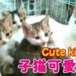 子猫達に癒されてください!・・・うちの猫ちゃんたちカワイイTV