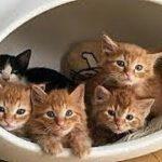 悲しき捨て子猫の短い生涯(泣)神様どうかチビ達を優しく導いてあげて下さい・招き猫ちゃんねる