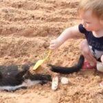 猫と赤ちゃんの戦い・猫に怒られた赤ちゃんの面白い動画・猫と赤ちゃんのハプニング #2