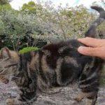 岩の上に座る野良猫をナデナデすると小さくフミフミしてカワイイ
