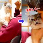 歯磨き粉を食べたい猫VS飼い主!壮絶な戦いの末に二人が見た景色とは…