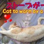 窓辺でくつろぐネコとストーブの前でごろんごろんするネコ・・・うちの猫ちゃんたちカワイイTV