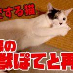 可愛い猫が突然豹変…!?ティッシュを咥えて野獣化する猫
