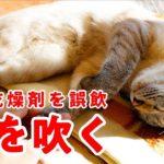 猫が乾燥剤を誤飲してしまいました