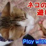 光って鳴く!ネコの手で遊んでみた 猫たちの反応が面白い・・・うちの猫ちゃんたちカワイイTV