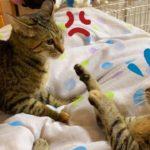 猫はベタベタからガブガブへ!柴犬はニコニコ  Kitten sisters good friends