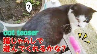 猫じゃらしそっちのけで甘えまくる野良猫・・・うちの猫ちゃんたちカワイイTV