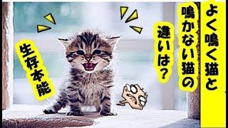 生存本能・鳴く猫と鳴かない猫の意味や違いは?!猫が「にゃ~」と鳴くワケは・招き猫ちゃんねる
