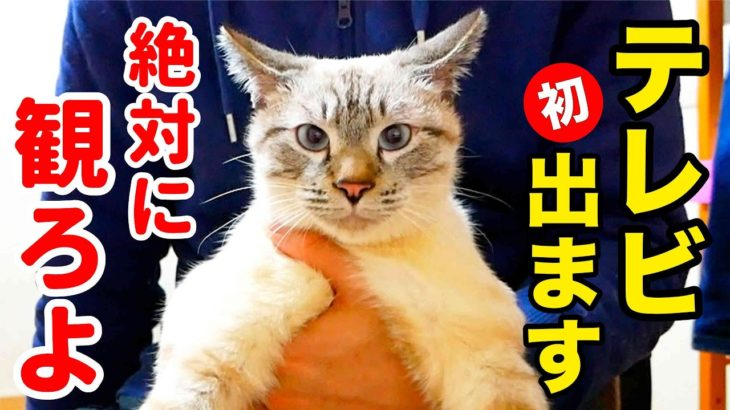 【朗報】猫のデュフィがテレビに初出演しました!!【見逃し配信あり】