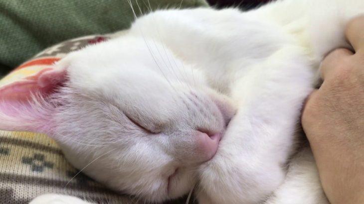 宇宙猫、腎不全の治療を開始する
