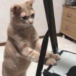 カメムシの臭いが手についた猫がおもしろい