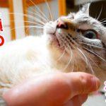 飛びつき抱っこをせがむ猫をモフったらガチで大変なことに…