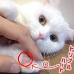 【ねこてそ】うちの猫の手相がとにかくスゴイ!!!