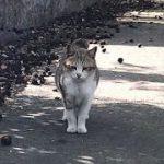 その鳴き声は可愛い過ぎて反則でしょう?小キジ猫 かわいい猫動画