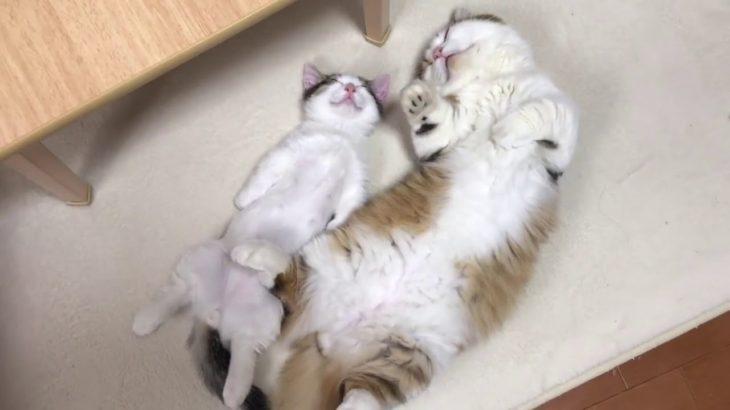 親子で気持ち良さそうに寝る秀吉と豆大福