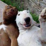 「かわいい瞬間」面白い動物, 猫のハプニング, 失敗動画集・かわいい犬, かわいい猫 #3