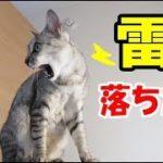 雷が落ちたときの猫4匹の反応