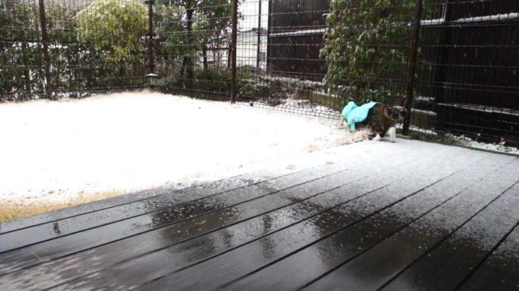 雪とねこ。-Snow and Maru.