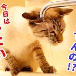 急に水浴びを始めた猫の足が滑って大変なことに…