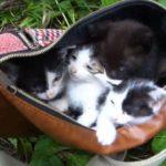 「その1」バイクで林道行ったら子猫が捨てられてたので持って帰ってみた。(I got a cat in the forest part1)
