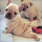「面白い動物」最高におもしろい犬, 猫のハプニング, 失敗動画集・かわいい犬, かわいい猫  #1