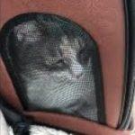 【おもしろい動物】猫が「ヤヴァイ〜・・、ヤヴァイ〜・・」と鳴くだけの動画。Twitterで話題!漫画家の小林博美さんの「ヤヴァイ〜」と鳴くねこちゃん