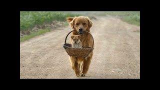 2019「絶対笑う」最高におもしろ犬,猫,動物のハプニング, 失敗画像集 #35