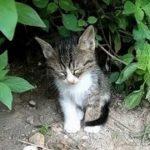 【爆笑】超笑える おもしろ猫動画 – 超かわいい