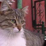 ふらふらな状態で犬にお別れを伝えに来た猫に泣けた(最期まで一緒に散歩がしたかった猫)The Cat Who Came to Say Goodbye