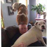 「面白い動物」あり得ないことをする犬, 猫・おもしろ犬, 猫のハプニング, 失敗集 #328