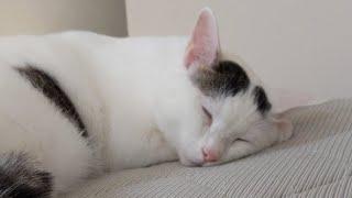 #5 ママがにゃんガルーパーカー着て猫4匹のライブ配信