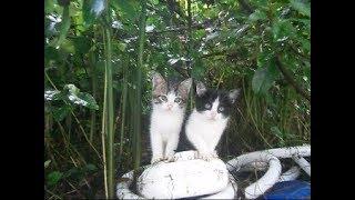 ビックリ、裏山から野良の子猫ちゃんがやって来た~(2)A stray kitten came from the mountain(2)【いなか猫1770】japanese funny cat