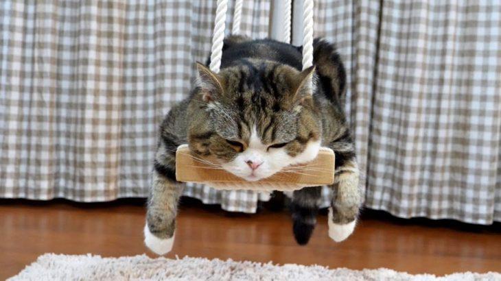 ブランコで寛ぐねこ。-Maru relaxes on the swing.-