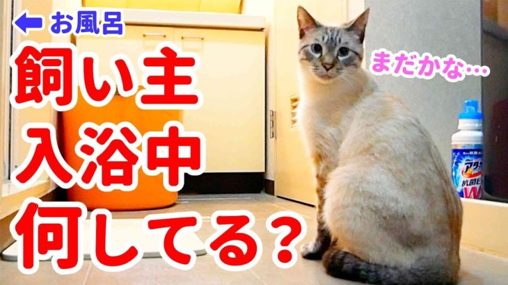 お風呂を待つ猫の様子を観察した結果…