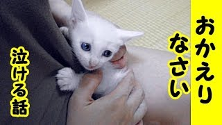 【猫 泣ける話】私のブランお帰りなさい(猫 感動 泣ける話 保護 動物 動画 里親)招き猫ちゃんねる