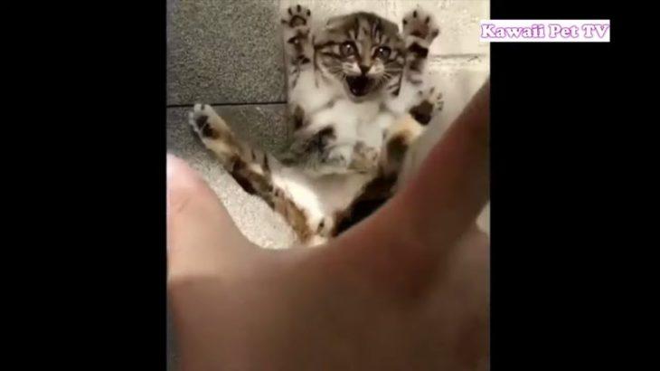 #1「おもしろ猫」何回見ても笑っちゃう 猫の面白いハプニング, 失敗画像集